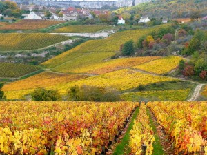 The vineyards of Burgundy in France in the autumn