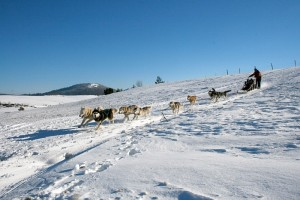 Learn how to be a musher in the Sancy mountains of the Auvergne