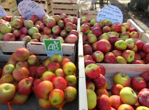 New season local apples