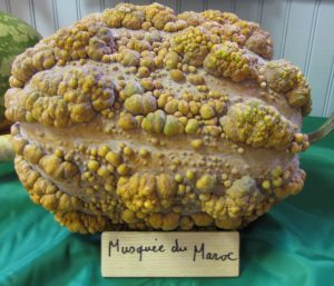 Warty autumn squash in France