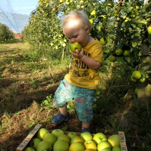 Picking your own fruit in France